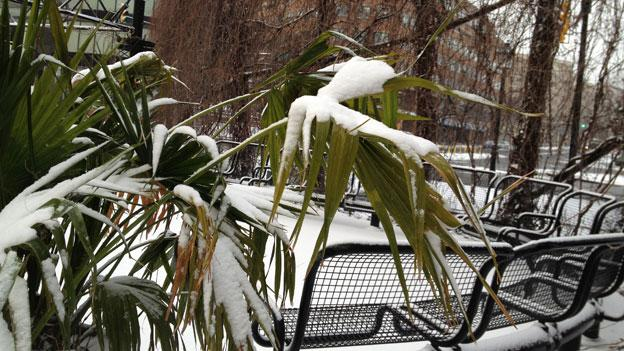 Snow covered the D.C. region this morning, although most roads remained clear.