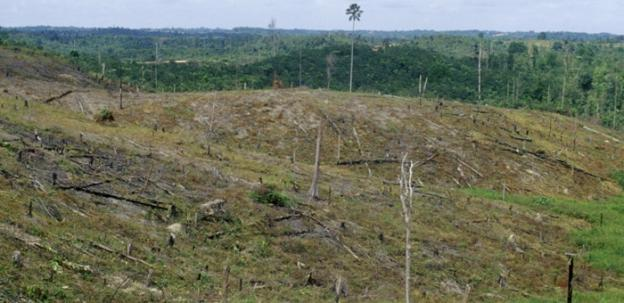 A deforested area of rainforest in Riau Province Sumatra, a source of wood pulp that environmentalists say goes into Mercury Paper products.