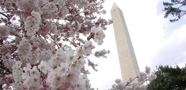 It will be an earlier-than-usual blossom for the cherry blossoms in 2012.