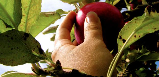 Proposed programs would make it cheaper for those on food stamps to purchase fruit.