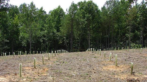 The one-acre American chestnut orchard established on Volunteer Training Site-Catoosa now supports approximately 225 seeds and seedlings. Eight-foot fences protect the delicate seedlings from deer and other animals.