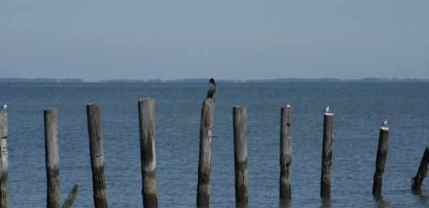 "The Chesapeake Bay suffers from ""dead zones,"" which are caused by inadequate oxygen in the bay's waters."