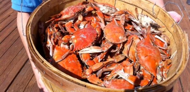 The crab population is up, with total abundance approaching levels not seen since the 1990s, but the number of adult females are down.