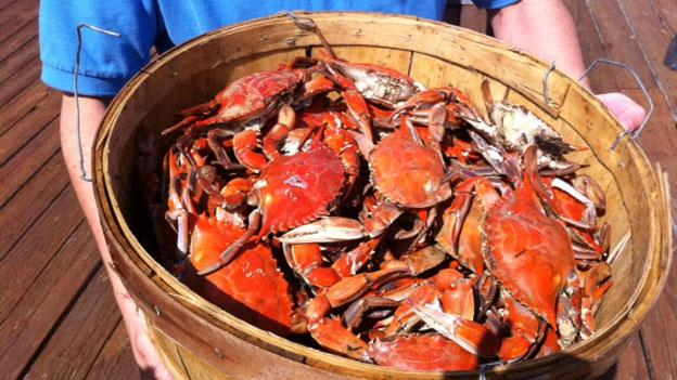 A bushel of cooked blue crab from the Chesapeake Bay.