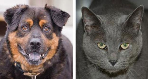 Shorty, left, and Tiva are two of the senior animals currently up for adoption at the Prince William County Animal Shelter. Senior citizens can adopt them for free until the end of April.