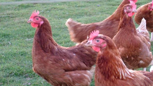 The court date for the poultry pollution lawsuit filed by the University of Maryland Environmental Law clinic has been postponed.