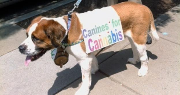 Protesters say the pace of medical marijuana implementation in D.C. is for the dogs.