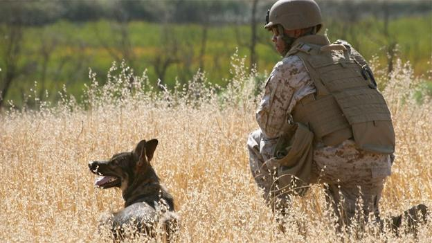 Always Faithful tells the story of U.S. marine dog teams who search for IED's and explosives in Iraq and Afghanistan. You can see the documentary feature on Sunday as part of the GI Film Festival.