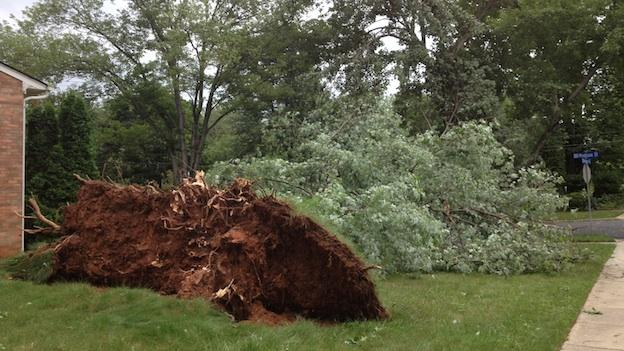 Thursday's storm uprooted and toppled a tree in a neighborhood near Montgomery College in Rockville, Md.