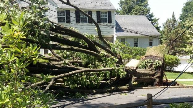 A tree in Northwest D.C. that was felled by the strong derecho storms in June. D.C. was spared from another storm of that strength.