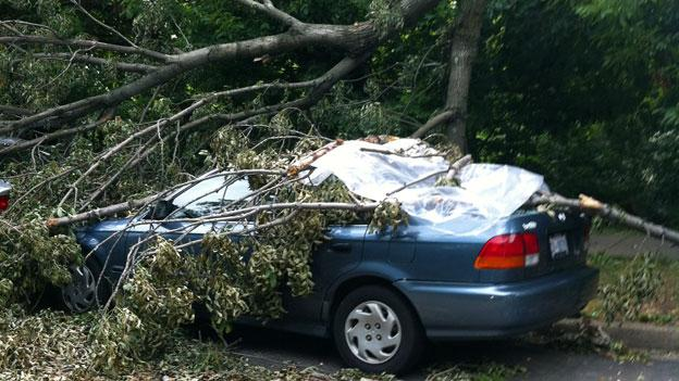 Down trees and power outages were widespread in the D.C. area after the June 29 storm.