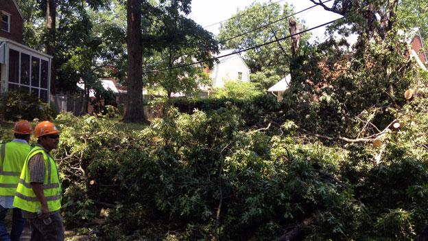 A crew works to clear a fallen tree from power lines on S. Aberdeen Street in Arlington.