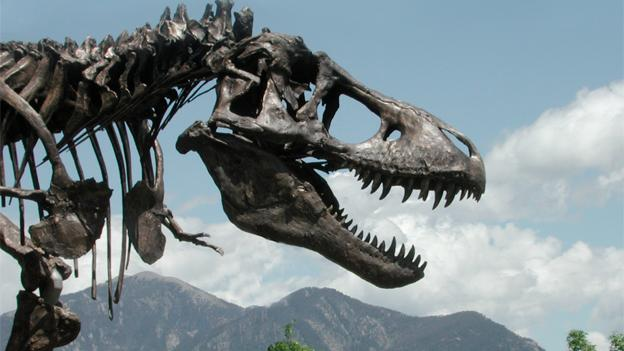 The rare T. rex specimen was previously on display the Museum of the Rockies in Bozeman, Mont.