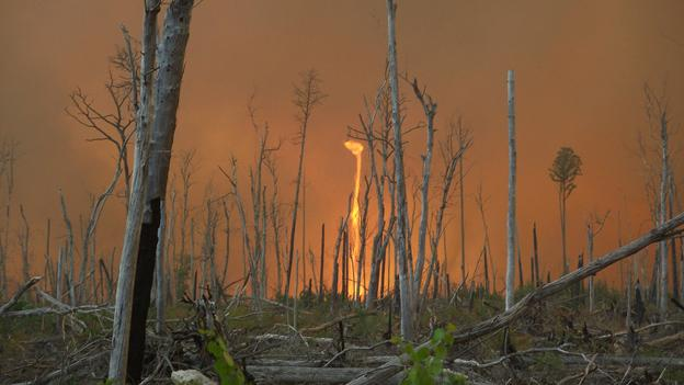 A fiery tornado rages off Corapeake Road in the Lateral West Wildlfire on Great Dismal Swamp National Wildlife Refuge in August. The fire, which burned for more than three months, was finally determined to be extinguished this week.