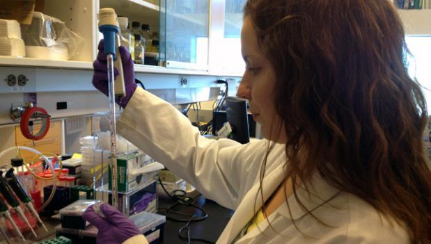 Laura Gottschalk, graduate student at Johns Hopkins University, prepares bacteria cultures for research into the genetic mutations associated with cystic fibrosis.