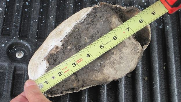 Researchers in Laurel, Md. uncovered a dinosaur bone after Hurricane Irene and Tropical Storm Lee hit the region.