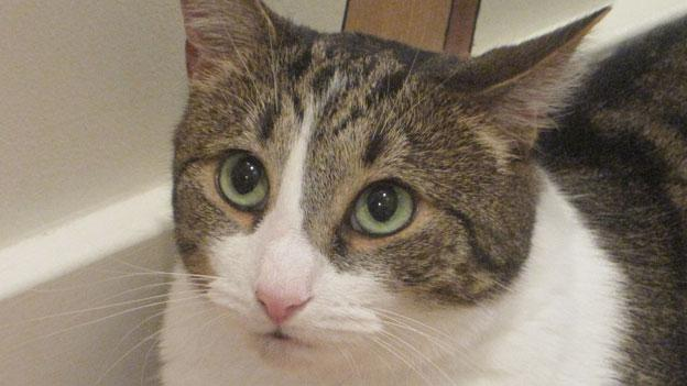 One of the residents of the Animal Welfare League's new cage-free cat shelter in Gaithersburg, Md.