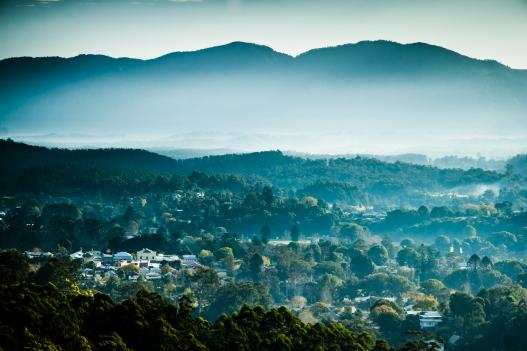 Bellingen, cocooned by a million camphor laurels. Copyright - photographer Gethin Coles.