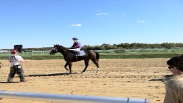 Laurel Park celebrates 100 years of horse racing.