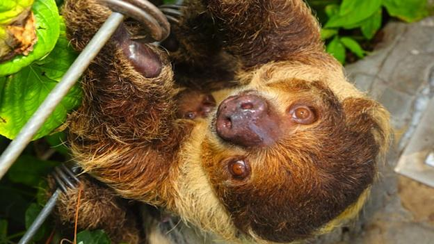 What would you name the Baltimore National Aquarium's baby sloth?