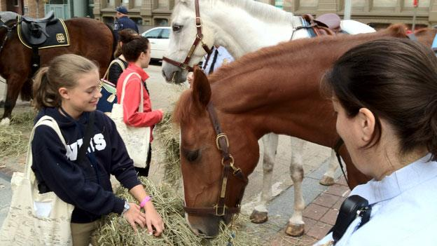 Horses get their breakfast on 8th Street NW outside the Washington International Horse Show.