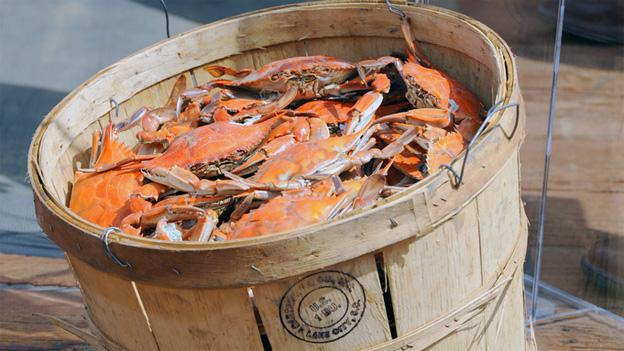 Virginia's crabbing ban goes into effect Dec. 15 this year, moving closer into mating season.