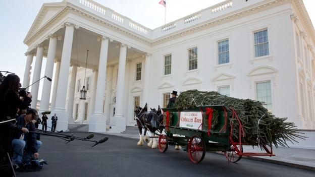 The official White House Christmas tree, a 19-foot Fraser Fir, arrives in a horse-drawn carriage at the North Portico of the White House, Nov. 23, 2012.