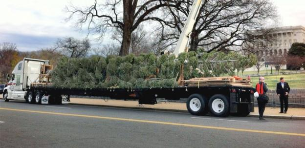 The Capitol Christmas Tree arrived via flatbed truck last Monday, prior to the lighting ceremony tonight.