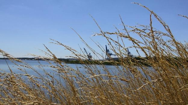 The Chesapeake Bay restoration project is one of the largest pollution control efforts in the United States.