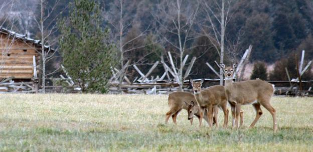Virginia's Department of Game and Fisheries is seeking to contain an outbreak of chronic wasting disease amongst deer.