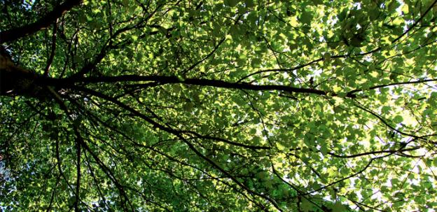Virginia loses up to 44 acres of tree canopy every day, according to a report.