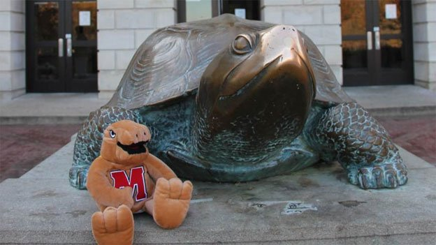 Testudo's nose is shiny from decades of students rubbing his nose for luck.