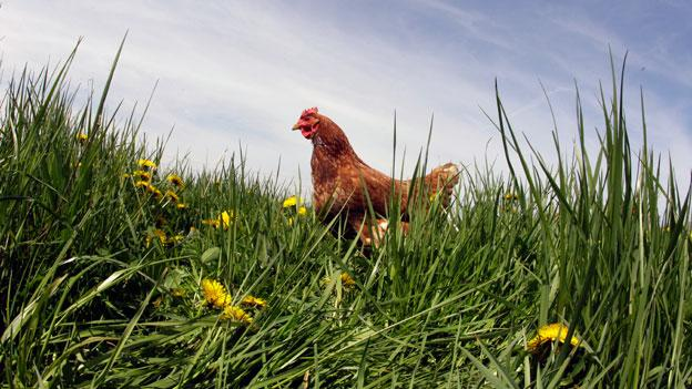 Environmental groups in Maryland are calling for stricter controls of manure from poultry farms.