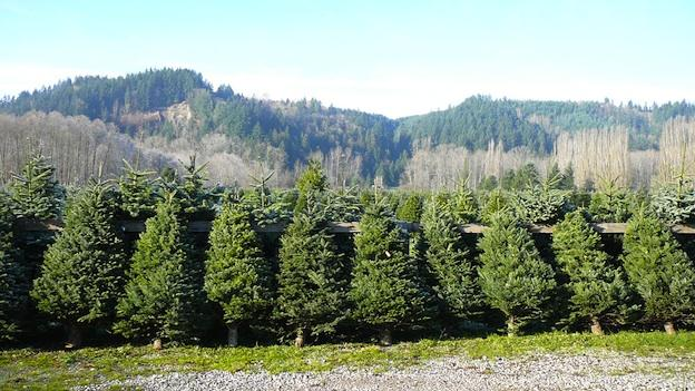 Sales from Christmas trees and locally grown products are helping to stimulate Virginia's agriculture industry.
