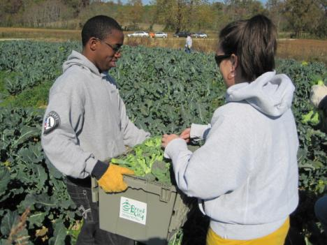 Kristin Valentine, development director of Bread for the City, hands over a 25 pound box of freshly harvested broccoli to a volunteer.