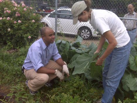 Adolfo Carrión digs potatoes in urban Philadelphia garden.