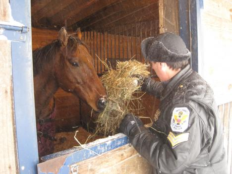 Sergeant David Schlosser of the U.S. Park Police feeds a police horse. Keeping the horses fed and hydrated at an outdoor facility is a challenge during the storm.