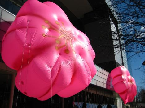Beyond the balloons you'll see in the Festival parade, the real cherry blossoms are predicted to start blooming March 31st.