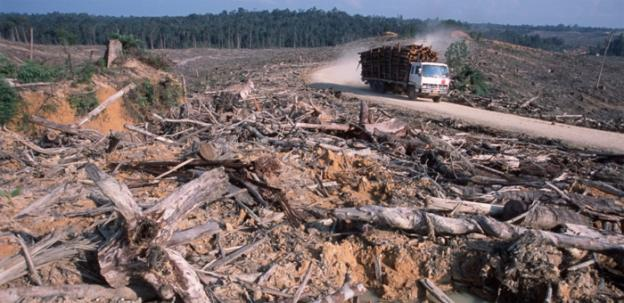 Asian Pulp and Paper denies that high value rainforest has been used in its paper products.