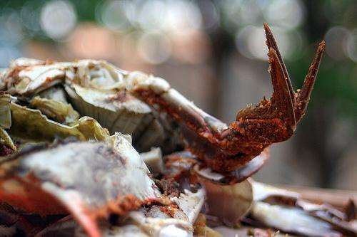 Crab lovers will have to wait to see whether crab prices during Memorial Day weekend will be affected by the Gulf oil spill.