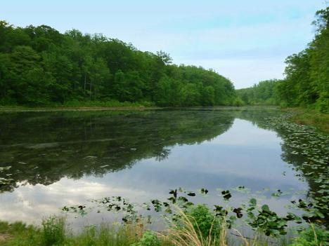 Admission to Cedarville State Forest, a national park in Brandywine, Maryland, is free for National Public Lands Day.