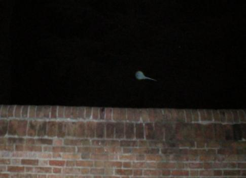 An orb captured in Williamsburg, Va. A ghost, or imagination?