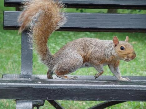 The new wildlife protection law outlines how pest control companies in the District can handle certain animals, including squirrels.