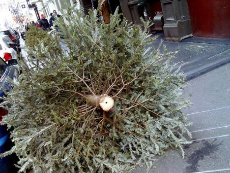 Christmas trees will be recycled across the D.C. region for the first two weeks in January.