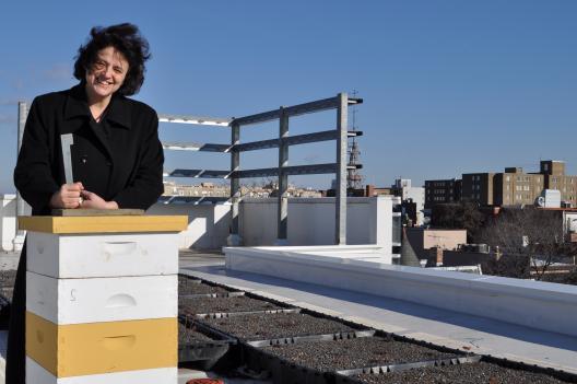 Veteran urban beekeeper Toni Burnham visits a rooftop beehive.