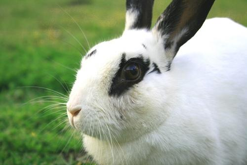 The president of a rabbit shelter in Virginia estimates that 90 percent of rabbits bought at Easter won't live longer than one year.