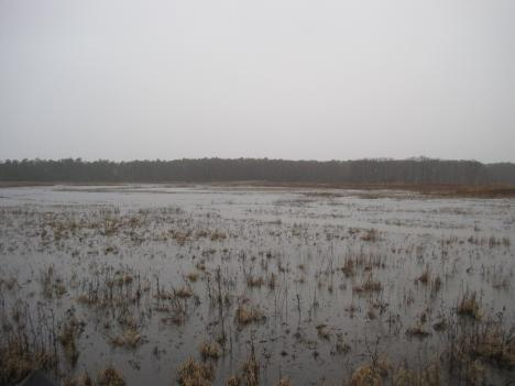 If water rises too quickly, it may reach a threshhold beyond which the marsh quickly deteriorates.