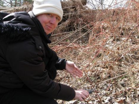 Kathy Jentz (pictured with the non-native invasive Multiflora Rose) is a longtime Weed Warrior.
