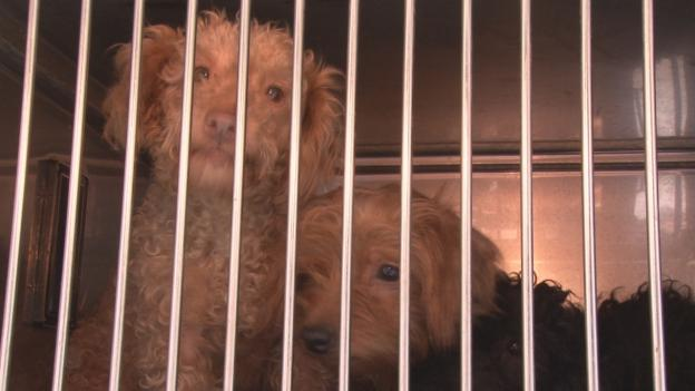 Senior Animal Control officials cannot remember a hoarding case involving so many dogs.