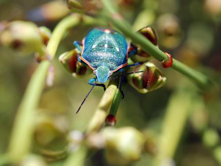 Local farmers worry stink bugs will continue to ruin crops this growing season.